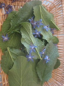uncooked borage leaves and flowers