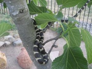 snake's close up